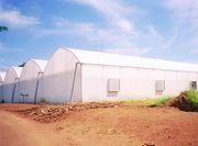 Теплицы плёночные для фермеров.