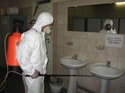 Уничтожение насекомых_ 806-18-42_ дезинсекция помещений в Ташкенте