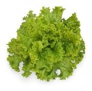 Семена Китано. Предлагаем купить семена салата KS 129 F1