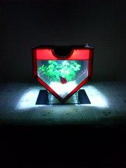 Уникальный мини-аквариум в форме сердца со всеми комплектующими.