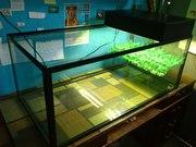 Акватеррариум для водяных черепах на 200 литров.