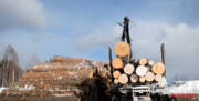 Поставляем качественный лес из регионов Дальнего Востока России