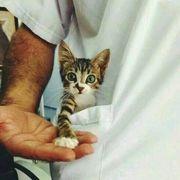 Ветеринар,  Ташкент — Чирчик (кошки,  собаки)