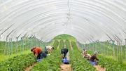 Разнорабочий на сельскохозяйственную ферму в Австрию
